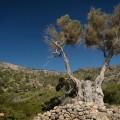 Crete, Lissos