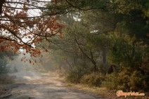 Greece, Thrace, Evros. Dadia forest