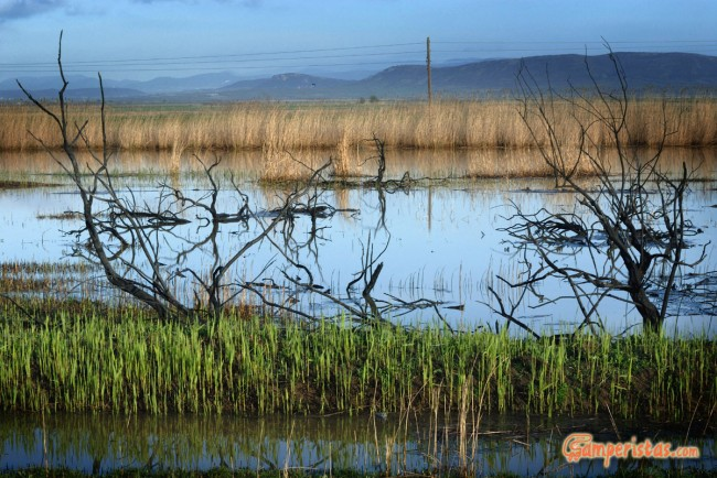 Greece, Thrace, river Evros delta. Wetlands burnt dowm by cattle-breeders