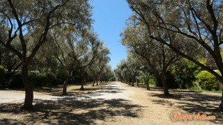 Camping Athens
