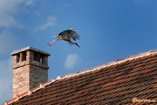 Hungary, Tokaj town, stork
