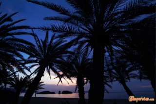 GREECE : Eastern Crete Vai beach and palm trees