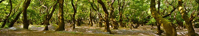 Greece, Peloponnese, Planitero