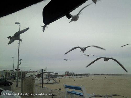 Parcheggiati sulla spiaggia di Calais, in piacevole compagnia.