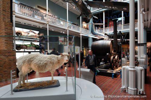 Una macabra curiosità: non è una pecora qualsiasi ma la famosa Dolly ;)