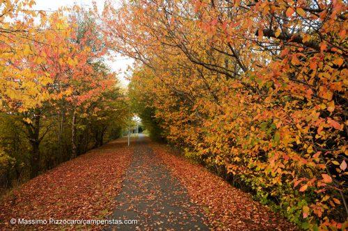 E' proprio arrivato l'autunno...